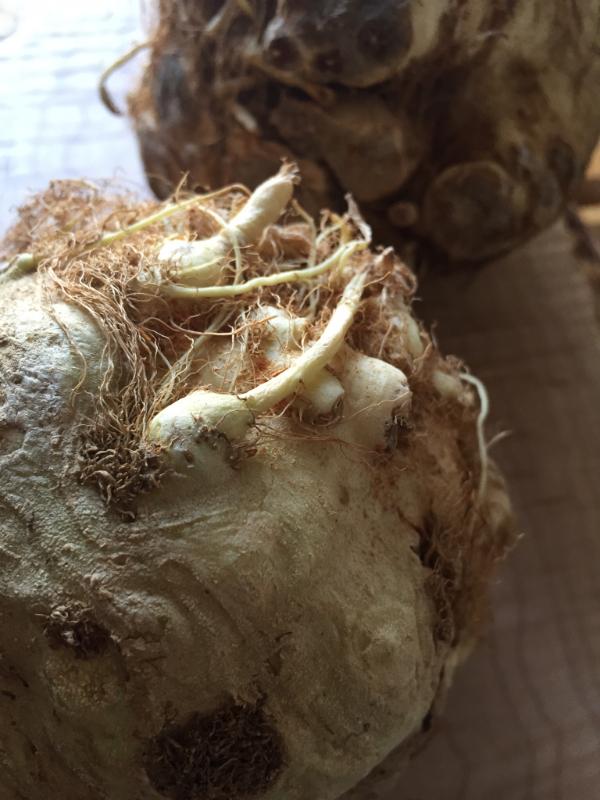 celery root puree3