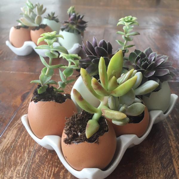 eggs succulents10