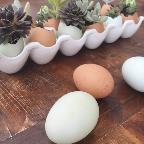 eggs succulents12